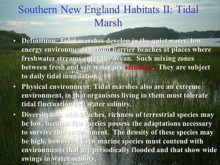 Southern New England Habitats II: Tidal Marsh Definititon: Tidal marshes develop in the quiet water, low energy environments behind barrier beaches at.