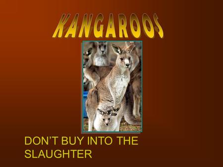 DON'T BUY INTO THE SLAUGHTER. Kangaroos are now being slaughtered not just in the remote outback but also in farming locations like Mudgee, since the.