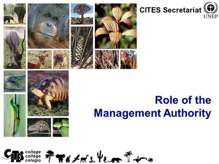 1 Role of the Management Authority CITES Secretariat.