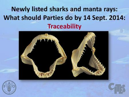Newly listed sharks and manta rays: What should Parties do by 14 Sept. 2014: Traceability.