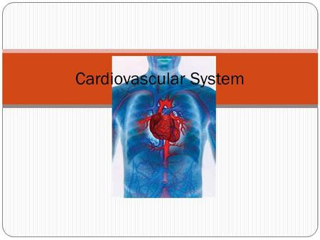 Cardiovascular System. The components to this system Heart Blood vessels Blood.