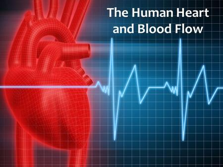 The Human Heart and Blood Flow.  Located in the Thoracic Cavity, between the two lungs and slightly to the left  About the size of a clenched fist.