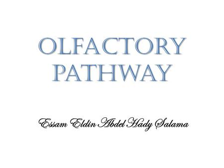 Olfactory pathway Essam Eldin Abdel Hady Salama. Sense of Smell  The olfactory epithelium is the organ of smell.  It covers the superior nasal conchae.