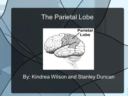 The Parietal Lobe By: Kindrea Wilson and Stanley Duncan.