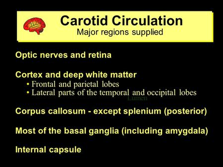 Carotid Circulation Major regions supplied Carotid Circulation Major regions supplied Lumen ventricle Optic nerves and retina Cortex and deep white matter.