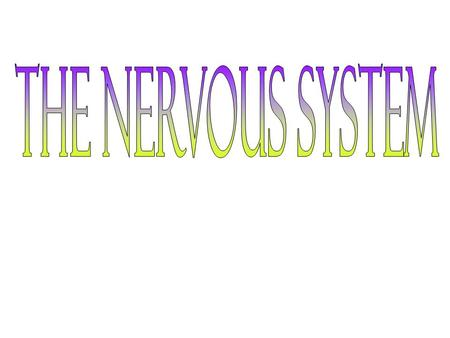 How the Nervous System Works The nervous system coordinates all of the activities in the body. It's a complex network that allows communication between.