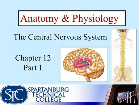 Chapter 12 Part 1 Anatomy & Physiology The Central Nervous System.