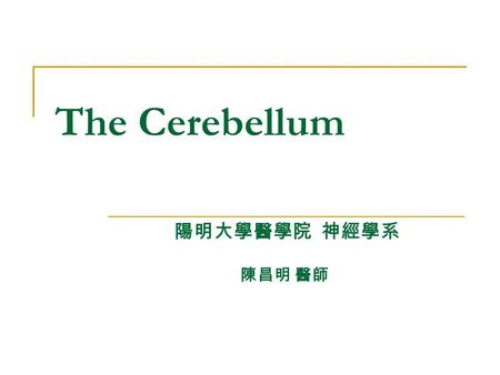 The Cerebellum 陽明大學醫學院 神經學系 陳昌明 醫師. Position Lies above and behind the medullar and pons and occupies posterior cranial fossa Cerebellum.