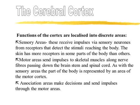 The Cerebral Cortex Functions of the cortex are localised into discrete areas: Sensory Areas- these receive impulses via sensory neurones from receptors.