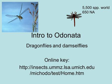 Intro to Odonata Dragonflies and damselflies Online key:  /michodo/test/Home.htm 5,500 spp. world 650 NA.