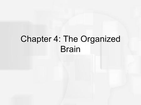 Chapter 4: The Organized Brain