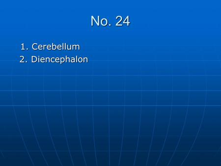 No. 24 1. Cerebellum 2. Diencephalon.