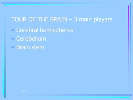9 - 1 TOUR OF THE BRAIN – 3 main players Cerebral hemispheres Cerebellum Brain stem.