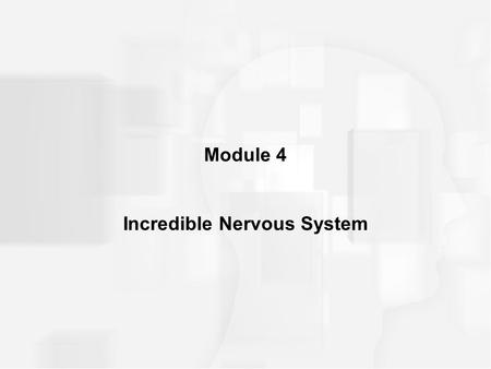 Incredible Nervous System