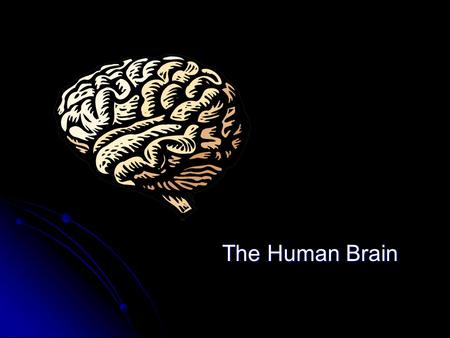 The Human Brain. Central Nervous System Brain and Spinal Cord Brain and Spinal Cord Spinal Cord Brain.