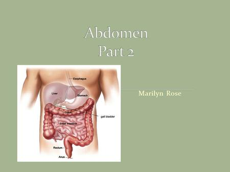 Marilyn Rose. Largest organ of abdomen Rt hypochondriac/ and epigastric regions Borders: Superior/lateral and anterior= Rt diaph Medial= sto/duodenum,