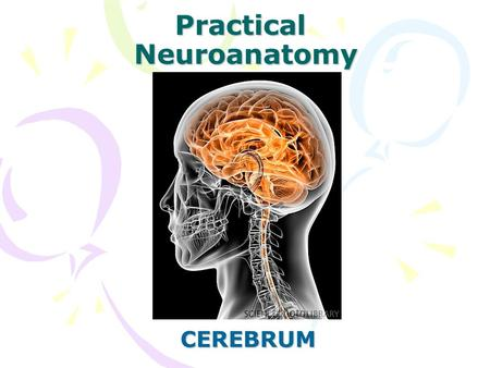 Practical Neuroanatomy