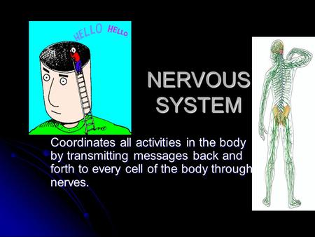 NERVOUS SYSTEM Coordinates all activities in the body by transmitting messages back and forth to every cell of the body through nerves.