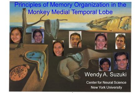 Principles of Memory Organization in the Monkey Medial Temporal Lobe Wendy A. Suzuki Center for Neural Science New York University.