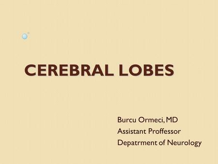CEREBRAL LOBES Burcu Ormeci, MD Assistant Proffessor Depatrment of Neurology.
