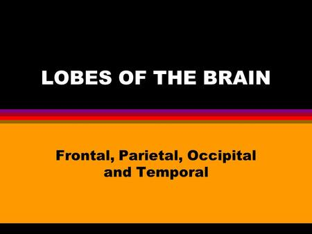 LOBES OF THE BRAIN Frontal, Parietal, Occipital and Temporal.