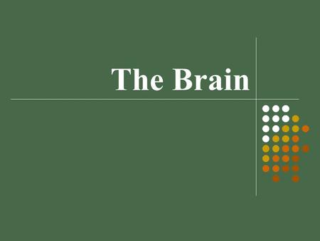 The Brain Module 08. Lower - Level Brain Structures brainstem: oldest, most basic part of brain medulla – controls life-support functions like breathing.