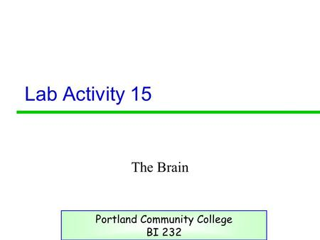 Lab Activity 15 The Brain Portland Community College BI 232.
