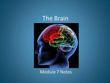 The Brain Module 7 Notes.