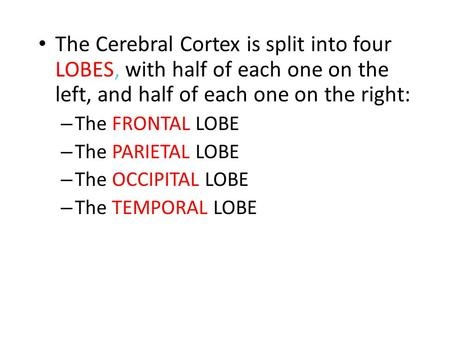 The Cerebral Cortex is split into four LOBES, with half of each one on the left, and half of each one on the right: The FRONTAL LOBE The PARIETAL LOBE.