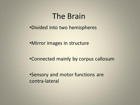 The Brain Divided into two hemispheres Mirror images in structure Connected mainly by corpus callosum Sensory and motor functions are contra-lateral.