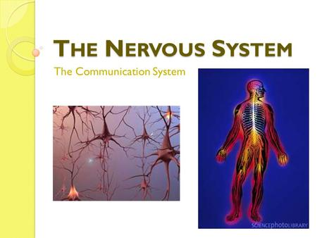 T HE N ERVOUS S YSTEM The Communication System. T HE N ERVOUS S YSTEM FUNCTION Function: to communicate conditions within the body and the surrounding.