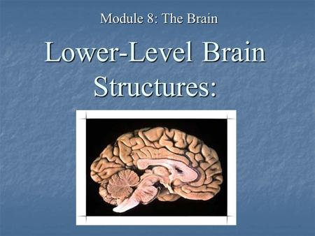 Lower-Level Brain Structures: Module 8: The Brain.