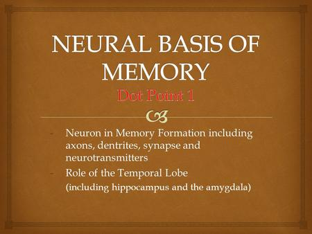 -Neuron in Memory Formation including axons, dentrites, synapse and neurotransmitters -Role of the Temporal Lobe (including hippocampus and the amygdala)