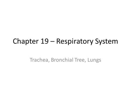 Chapter 19 – Respiratory System Trachea, Bronchial Tree, Lungs.