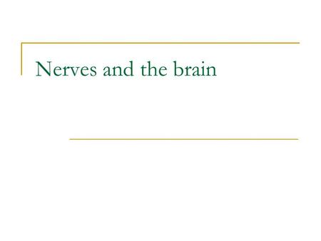 Nerves and the brain. Nerve A nerve is a bundle of axons or neuronal fibres bound together like wires in a cable. Neurons or nerve cells are the functional.
