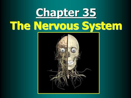 Chapter 35 The Nervous System. Nervous System Functions 1. Receive & relay information throughout body 2. Monitor & respond to internal and external changes.