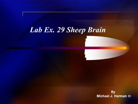 Lab Ex. 29 Sheep Brain By Michael J. Harman . External – Doral View.