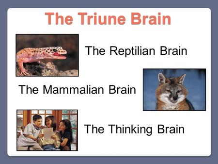 The Reptilian Brain The Mammalian Brain The Thinking Brain The Triune Brain.