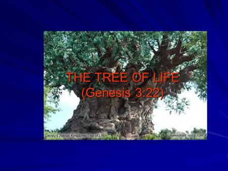 THE TREE OF LIFE (Genesis 3:22). One of the MOST significant symbols in the entire Bible. Was placed for the EVERLASTING benefit of man. Ultimately, the.