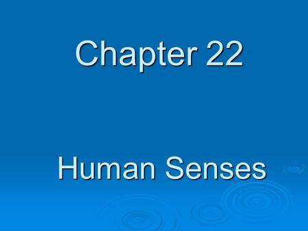 Chapter 22 Human Senses. What are the 5 Senses?  1. Sense of Sight – Vision  2. Sense of Hearing - Auditory  3. Sense of Smell – Olfactory  4. Sense.