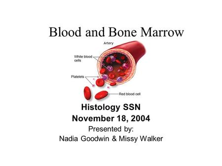 Blood and Bone Marrow Histology SSN November 18, 2004 Presented by: Nadia Goodwin & Missy Walker.