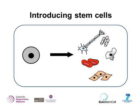 Introducing stem cells. This presentation is intended as a flexible tool for scientists, science communicators and educators. Not all the slides will.