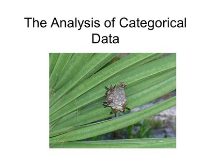 The Analysis of Categorical Data. Categorical variables When both predictor and response variables are categorical: Presence or absence Color, etc. The.