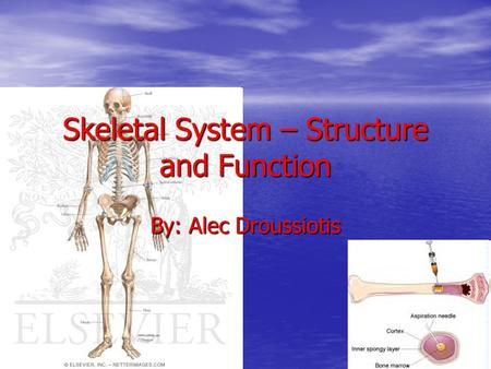 Skeletal System – Structure and Function By: Alec Droussiotis.