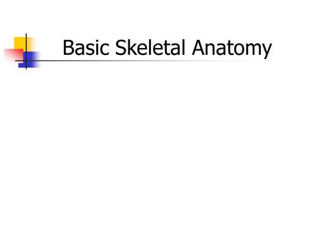 Basic Skeletal Anatomy. Skeletal System - Functions Support & shape to body Support & shape to body Protection of internal organs Protection of internal.