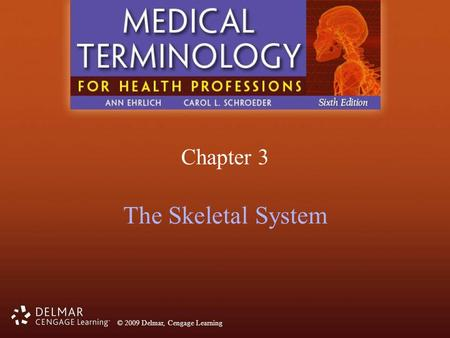 Chapter 3 The Skeletal System.