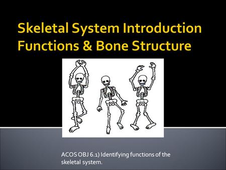 ACOS OBJ 6.1) Identifying functions of the skeletal system.