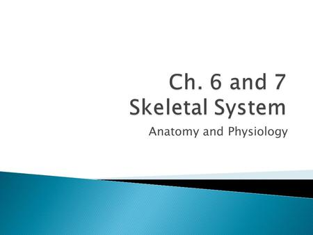 Anatomy and Physiology. 1. Support 1.Not just place to hang muscles – need bones for framework 2.Muscles need something to pull against 3.Site for organs.