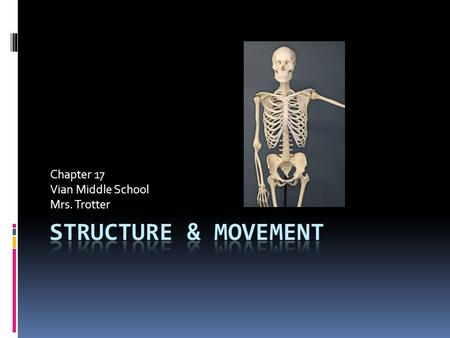 Chapter 17 Vian Middle School Mrs. Trotter. Internal & External Structures Protect Your Body  Bones  skin.