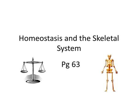 Homeostasis and the Skeletal System Pg 63. Homeostasis Homeostasis – The body's ability to regulate its inner environment Keeping the body's systems in.